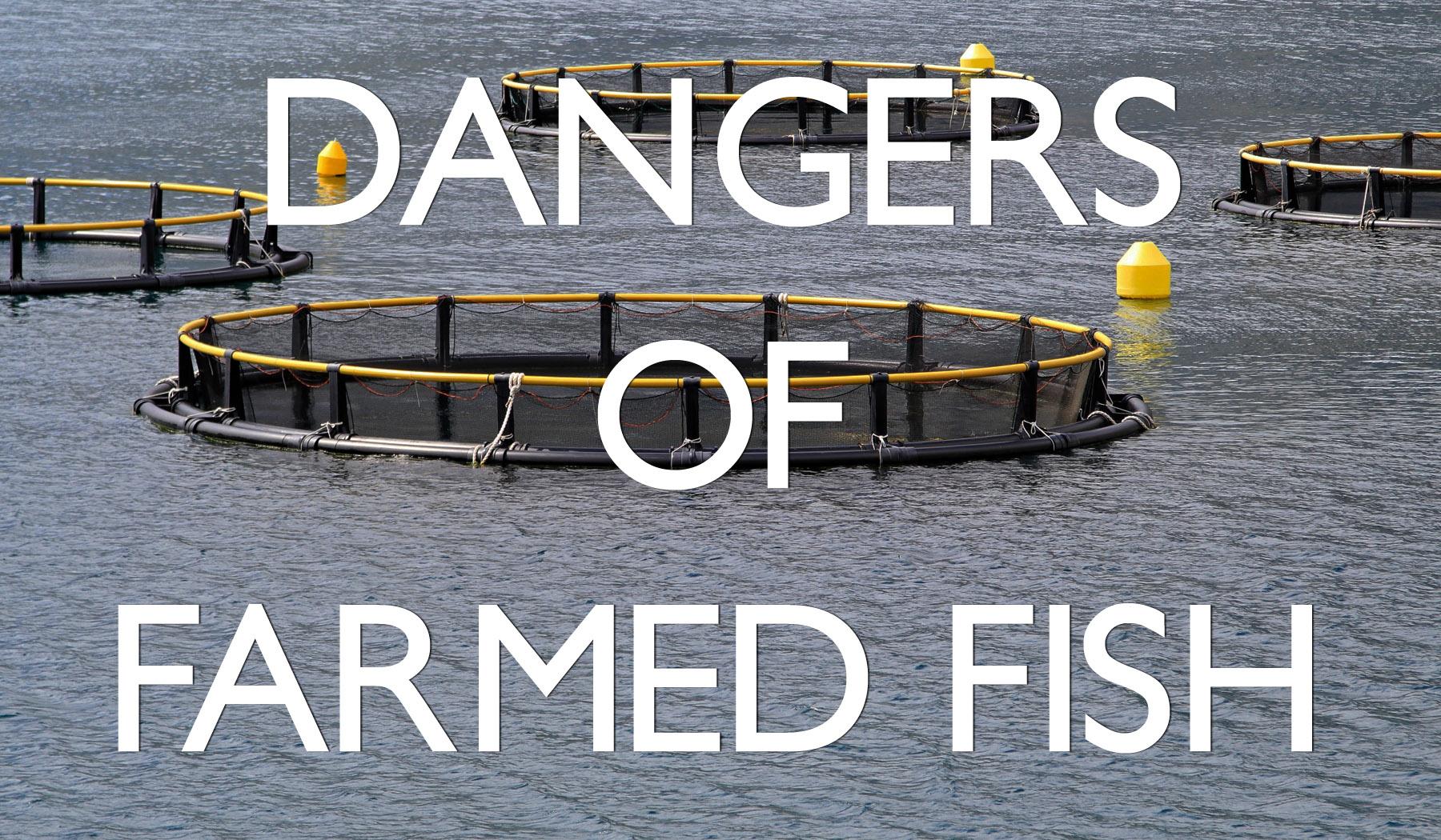 Health Dangers: Farmed Fish