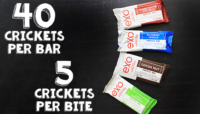 Product Review Exo Cricket Protein Bars 3