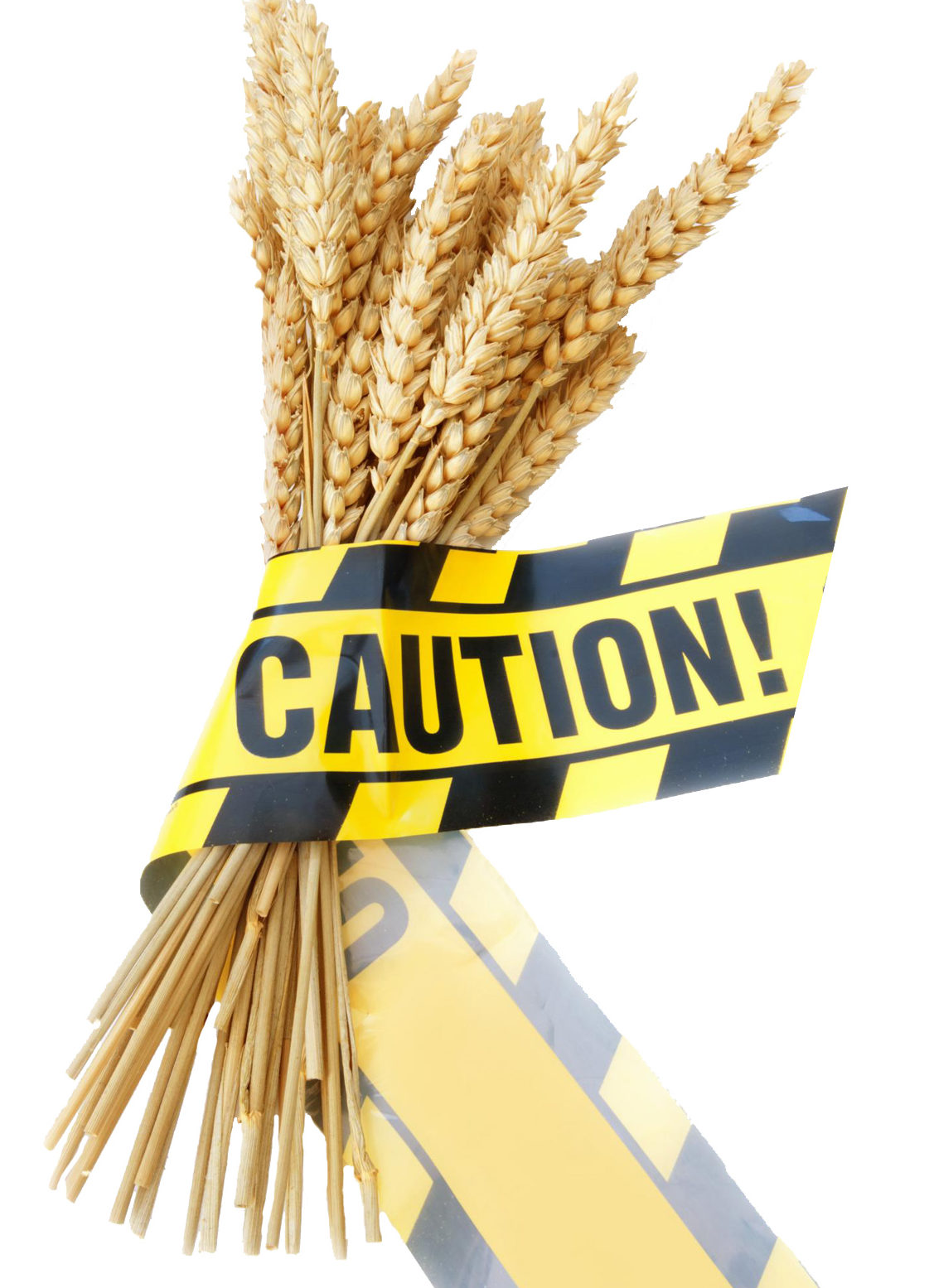 wheat gluten celiac food sensitivity