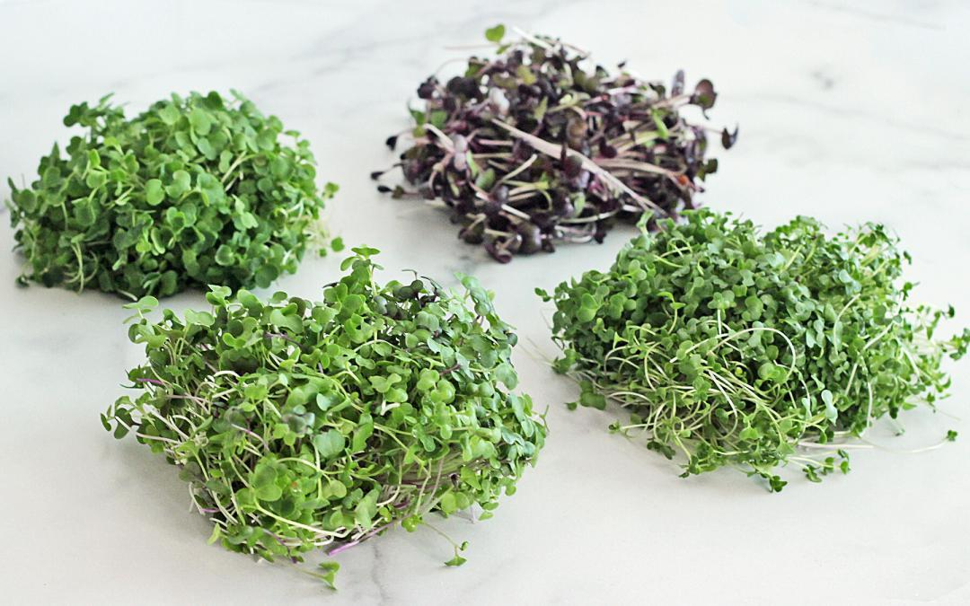 Get to Know Microgreens!